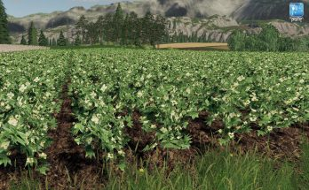 Forgotten Plants – Cotton v 1.0